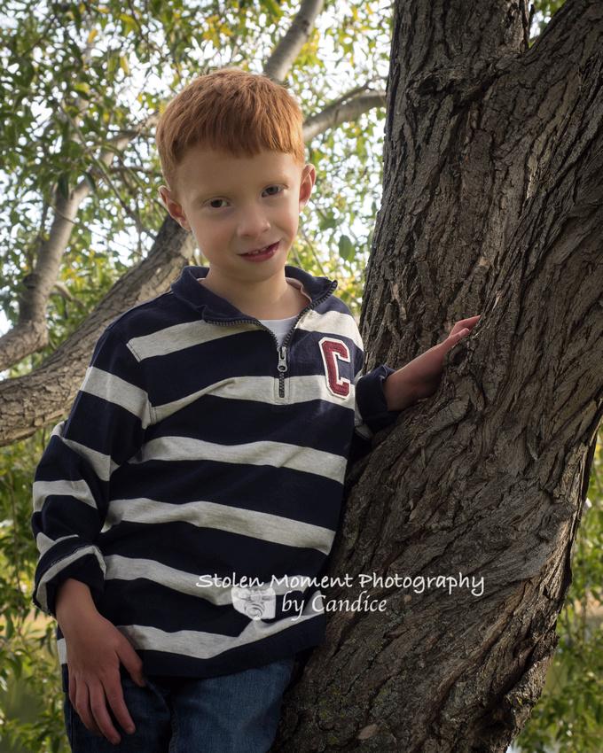 a boy up in a tree