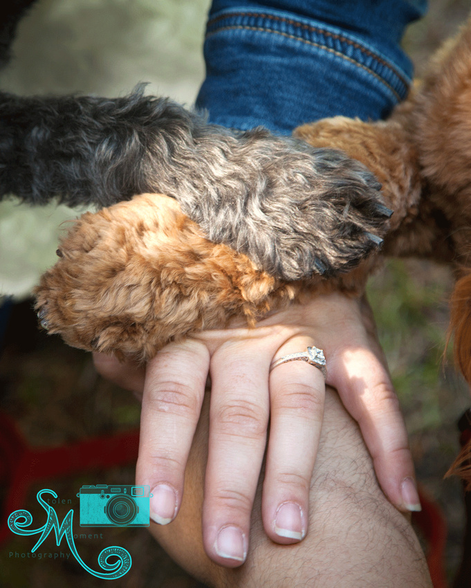 a man's hand with his fiancé's hand on top and their two dogs' paws on top of hers