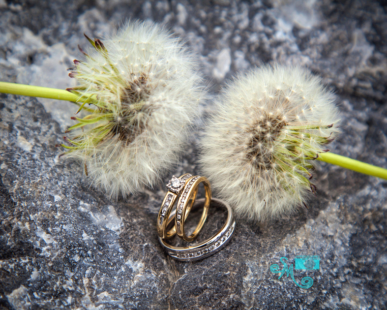 the rings with two dandelion fluffs behind them