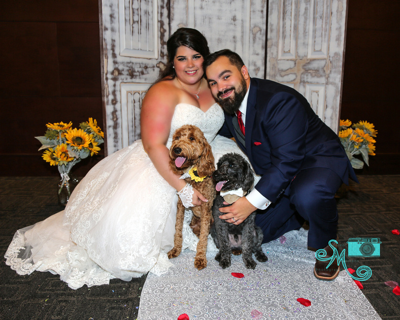 the bride and groom with their two dogs