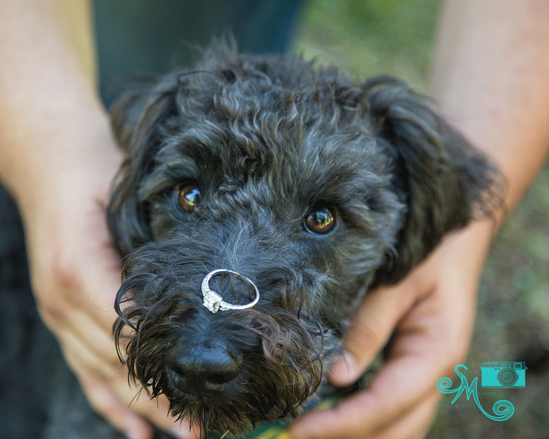 a dog balances an engagement ring on his nose